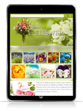 responsive web design flower #00016